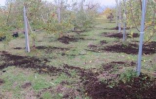 牛糞籾殻堆肥の散布