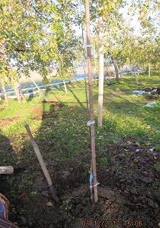 りんごを植える