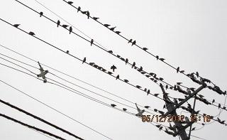 鳥達も見守り