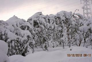 雪を被ったりんご