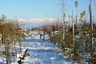 リンゴ園の冬景色