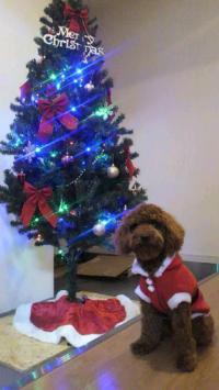 チョコクリスマス⑤