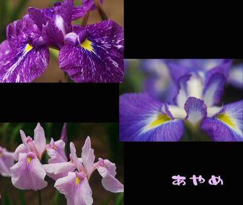10jun11-55.jpg