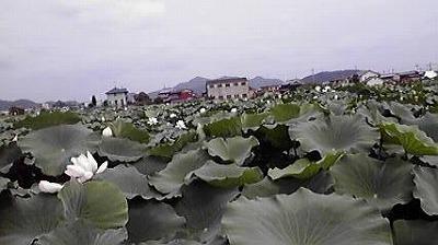 shukusho-P1000615.jpg