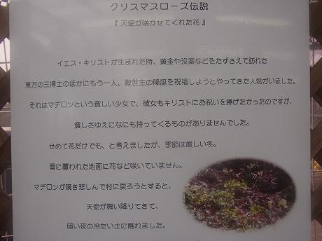 shukusho-RIMG0242.jpg
