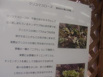shukusho-RIMG0247.jpg