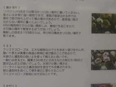 shukusho-RIMG0250.jpg