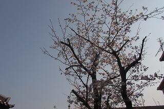 shukusho-RIMG0454.jpg