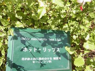 shukusho-RIMG0522_20120519143818.jpg