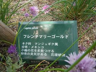 shukusho-RIMG0527_20120519142321.jpg