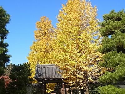shukusho-RIMG1511.jpg