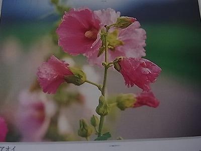 shukusho-RIMG1529.jpg