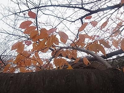 shukusho-RIMG1543.jpg