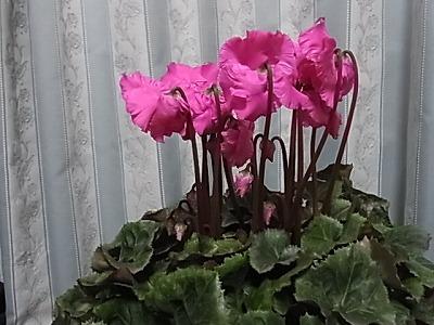 shukusho-RIMG1591.jpg