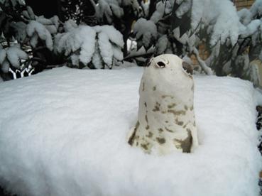 雪のマラカスぼうや