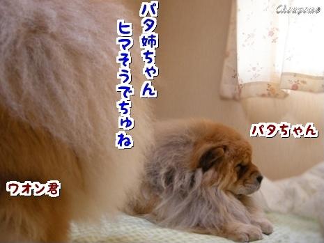 1-20100608.jpg