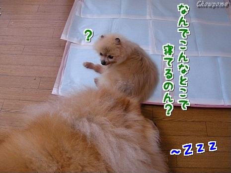 6-20100616.jpg