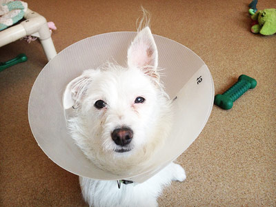 doggie-3162012.jpg