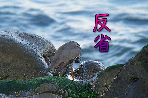 20110520hansei.jpg
