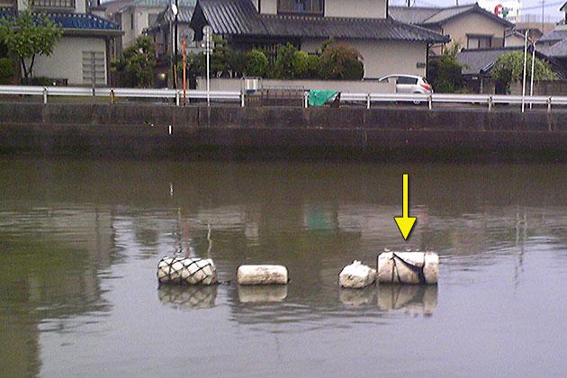 20110526kiashishigi.jpg