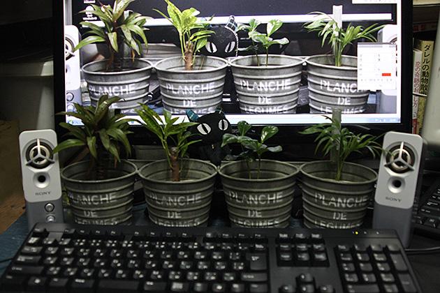 20110610plants.jpg