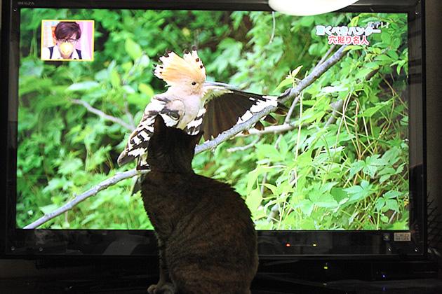 20110613birdcat02.jpg
