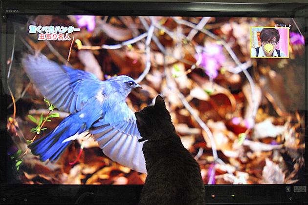 20110613birdcat03.jpg