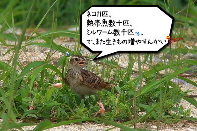 20110629hibari_20110629194835.jpg