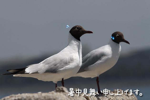 20110716yuri.jpg