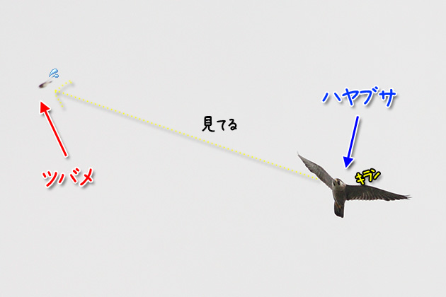 20110722hayabusa02_20110722231535.jpg