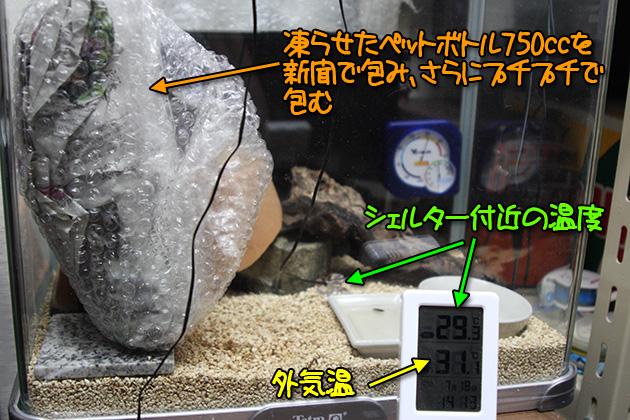 20110728leopa02.jpg