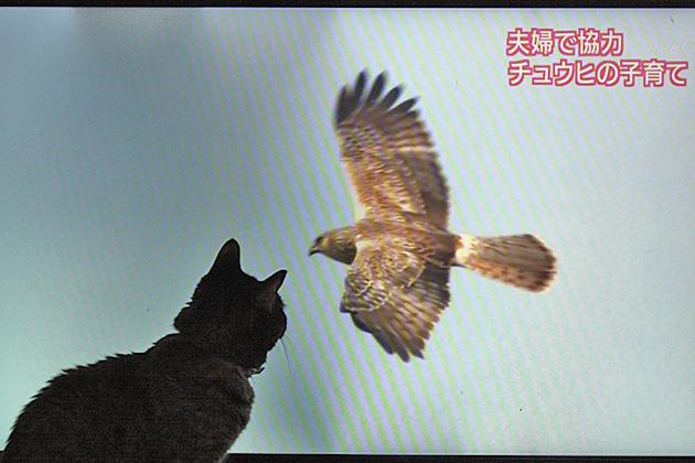 20110807chuhi.jpg