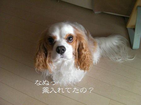 20101203_4.jpg