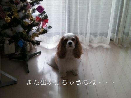 20101206_1.jpg