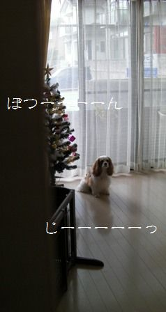 20101206_2.jpg