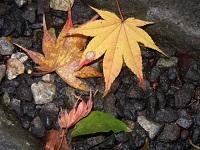 kouyou_20111128171735.jpg