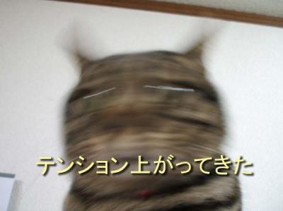 136_20090327131439s.jpg