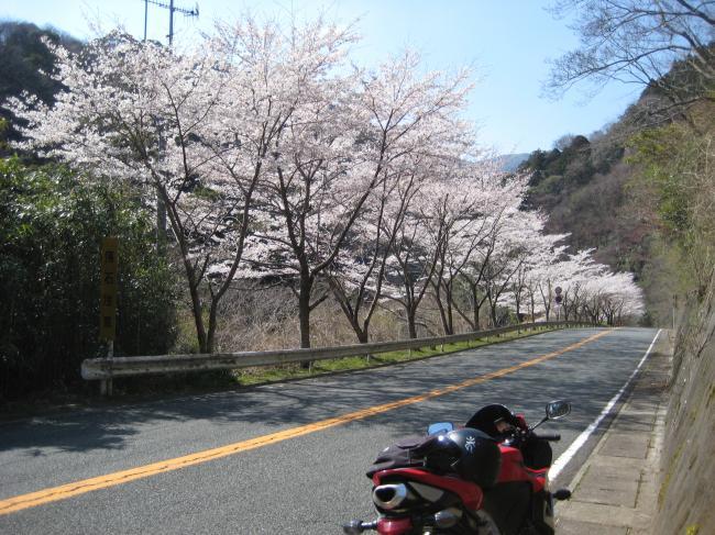 4.8 桜_convert_20120408165103
