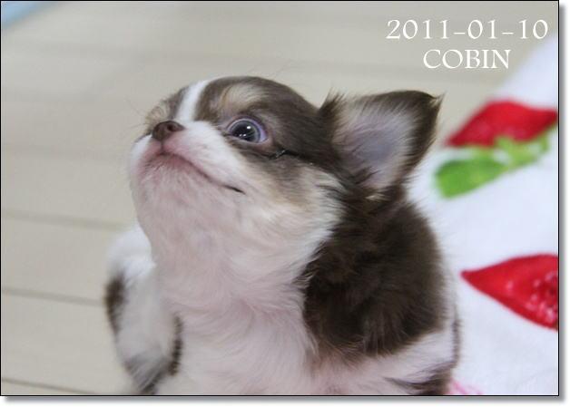 2011-01-10-1.jpg