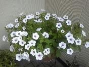 moblog_572395a8.jpg