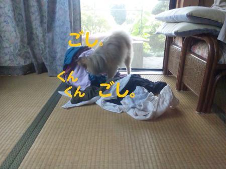 洗濯物がお好き まめ。