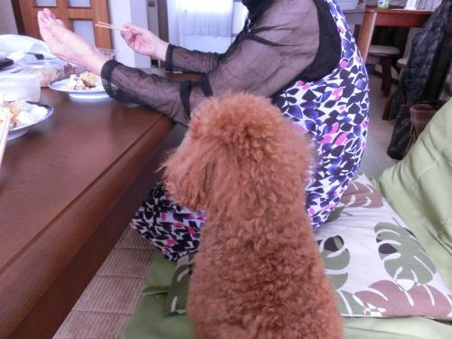 ばあちゃんとココア