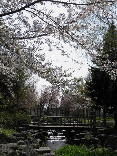 2012.05.10sakura 091