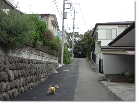 20111024-DSC00298.jpg