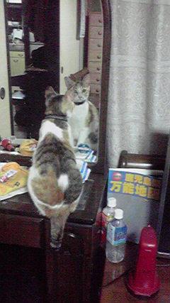 ナルシスト猫