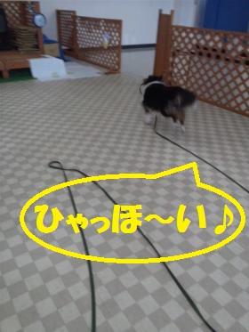 DVC00060_convert_20110602172110.jpg