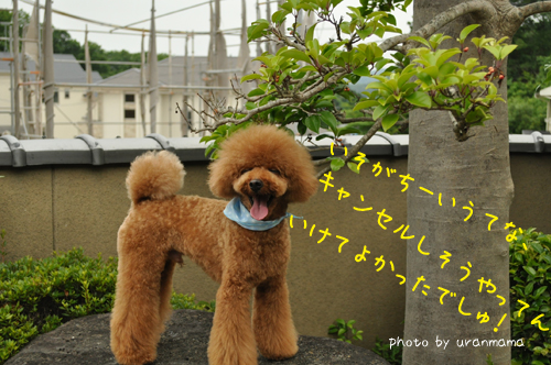 DSC_6549.jpg
