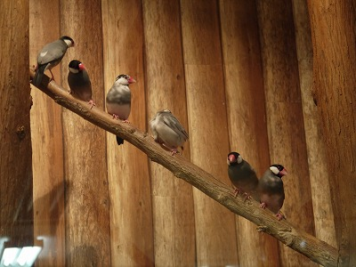 那須どうぶつ王国の鳥さんたち6