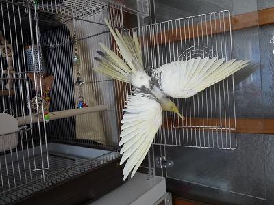 那須どうぶつ王国の鳥さんたち、そら2