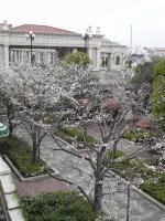 20110403桜